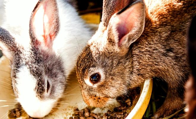 Комбикорм для кроликов в Рязани
